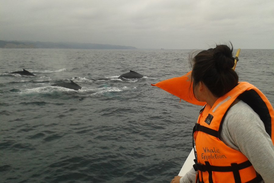 Whale Expeditions Ecuador