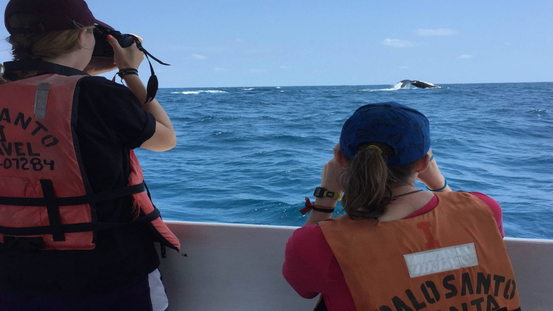 Programa de Monitoreo de Ballenas