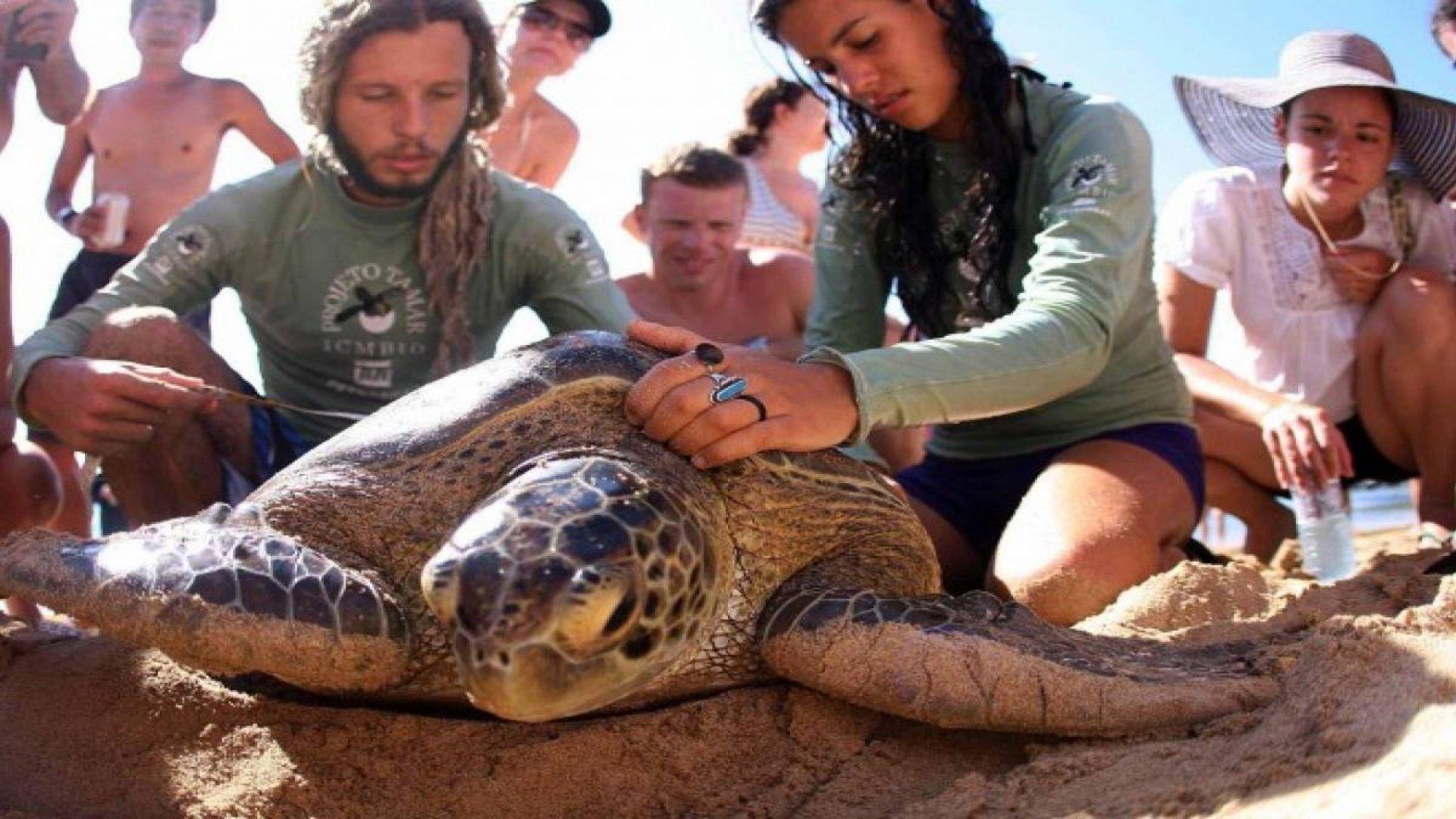 Sea Turtle Conservation Program