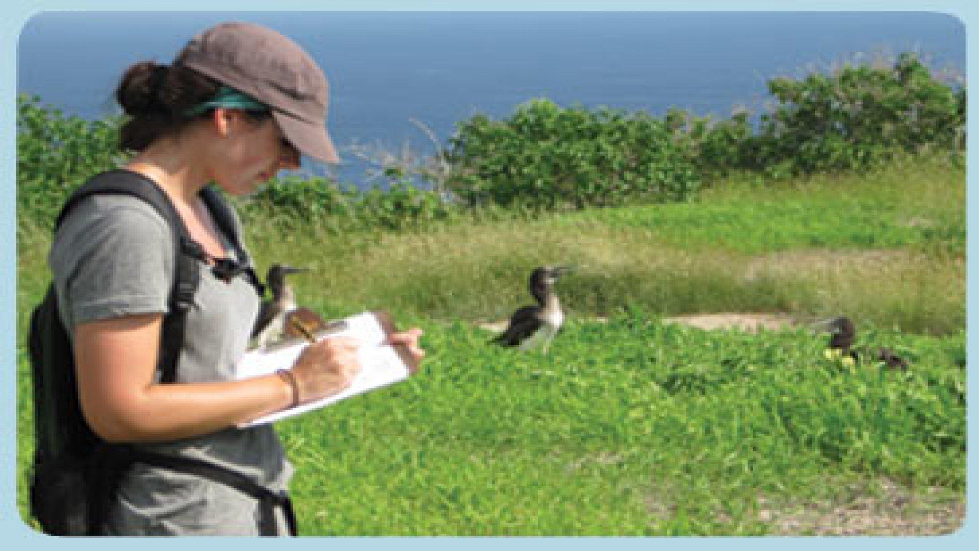 Programa Censo y anillamientode Aves Marinas